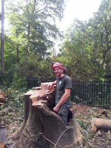 Stump Grinding for Surrey and the surrounding area