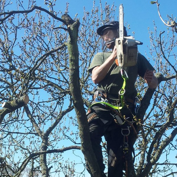 Another great shot of Blue Sky Tree Care tree surgeons