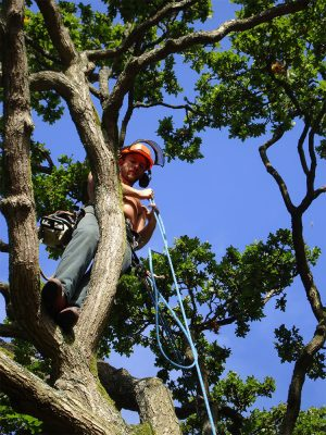 Expert tree surgeons based in Surrey.  Competitive quotes and great service.