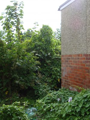 Ivy/Climber removal for Surrey, Hampshire and West Sussex