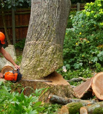 Tree Dismantling / Felling for the Home Counties area
