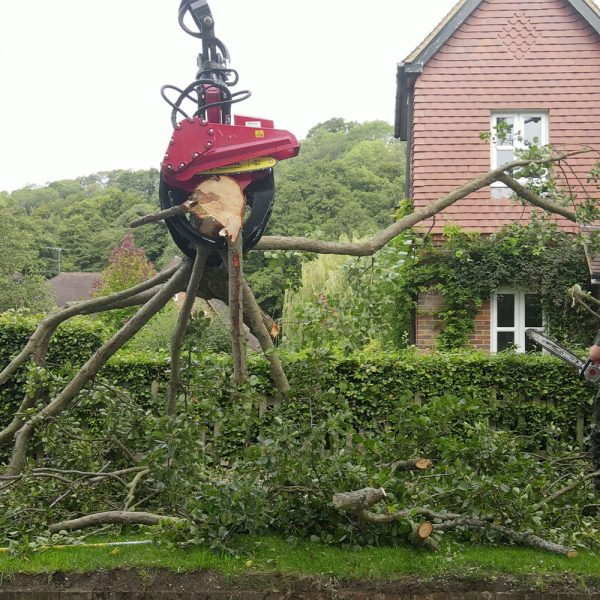 Close up of our grapple saw neatly taking down a tree for mechanical dismantling